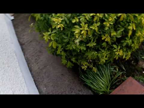 Power cleaning Dublin by leaf2leaflandscapes