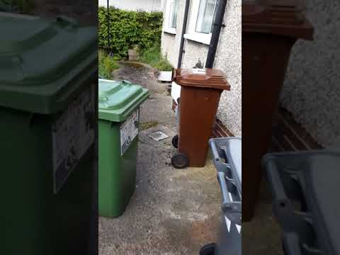 Patio cleaned and some General Garden tidy up Dublin by leaf2leaflandscapes before