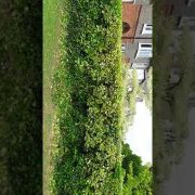 Hedge trimming, tree prunning in Dollymount Co.Dublin done by leaf 2 leaf landscapes