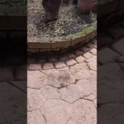 High Quality pressure cleaning and Gardening done by leaf2leaf landscapes in Clontarf Co.Dublin