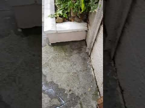 High Quality pressure cleaning and Gardening done by leaf2leaf landscapes in Dunlaoghaire Co.Dublin