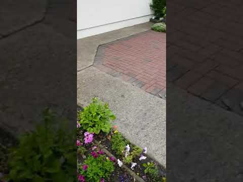 Driveway cleaning &Garden maintenance done by leaf2leaflandscapes Coolock Co.Dublin