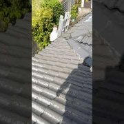 Roof cleaning in clonee Co.Dublin done by leaf2leaflandscapes